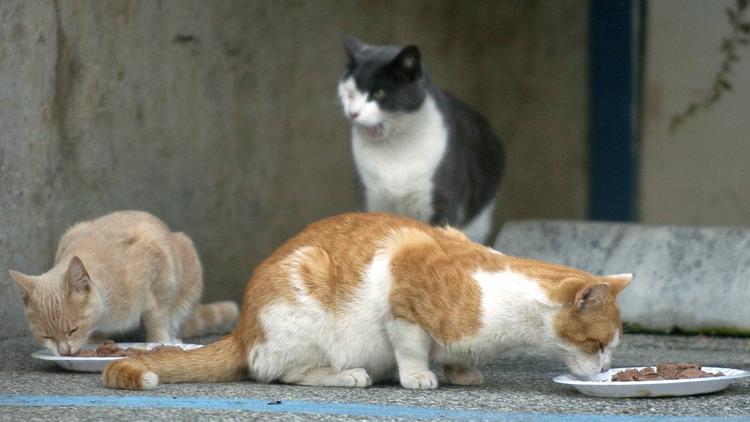 Gatos cerca de Harbor UCLA