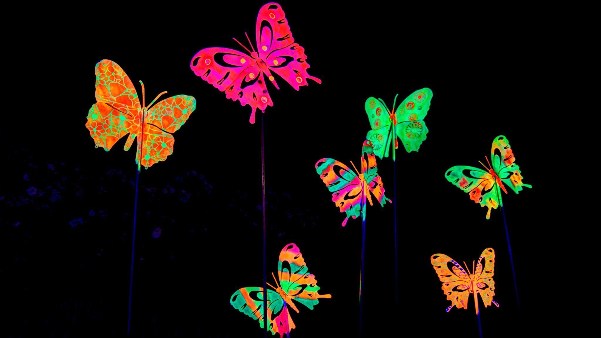 A close up of the butterflies