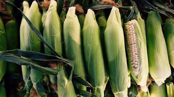 Corn is in season. We have recipes
