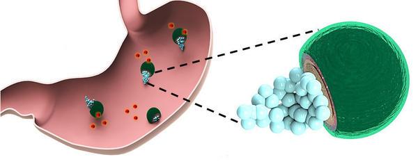 Micromotors neutralize stomach acid, deliver antibiotic