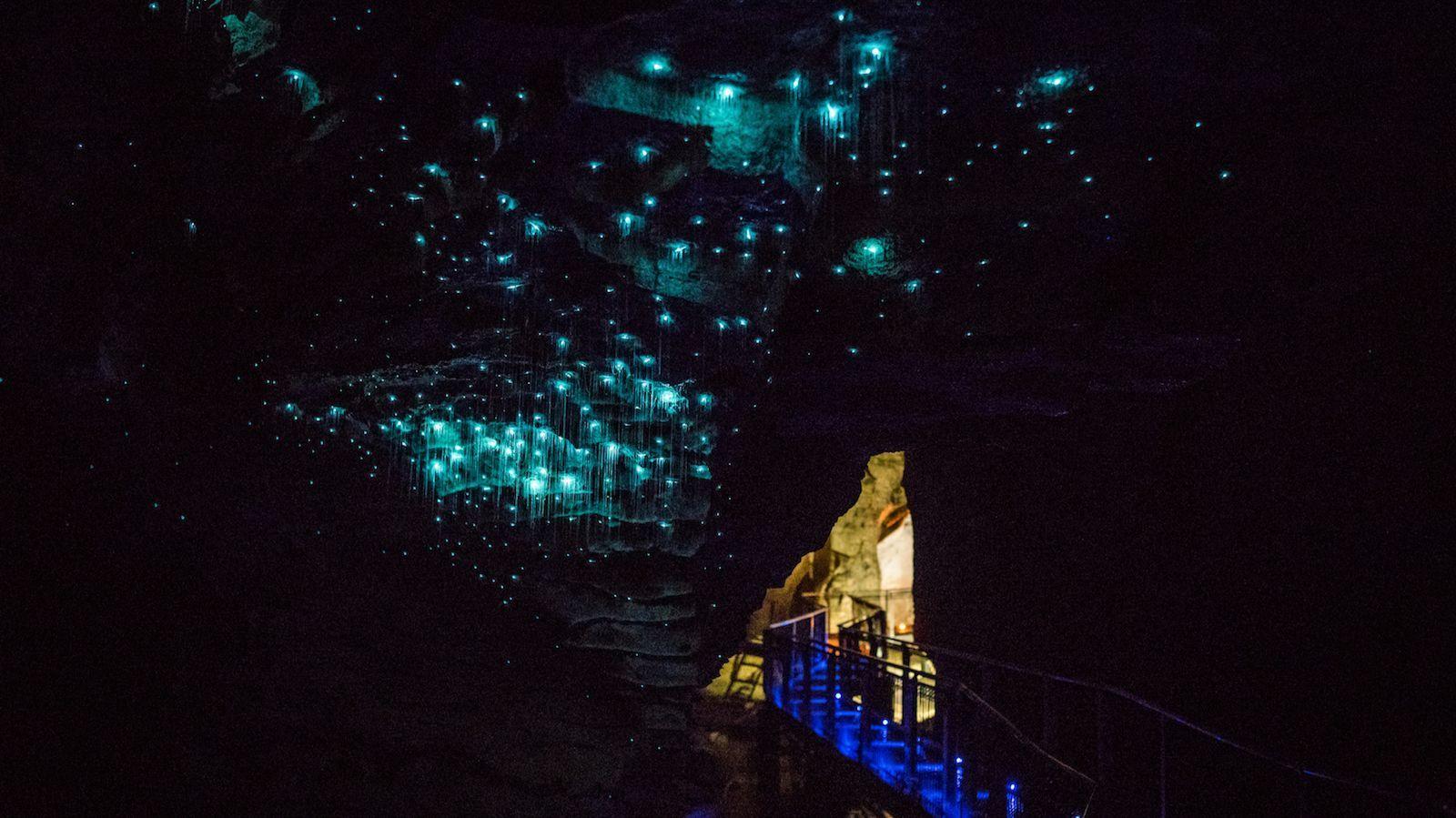 Glow worms at the Waitomo Caves.