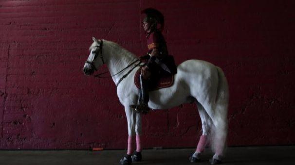 Traveler, USC's mascot, comes under scrutiny for having a name similar to Robert E. Lee's horse