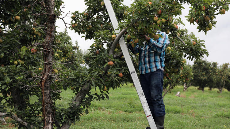Rendleman Orchards migrant workers