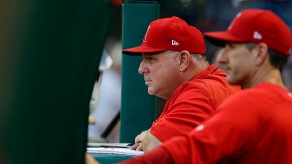 Mike Scioscia might be having his most impressive season in 18 years as Angels manager