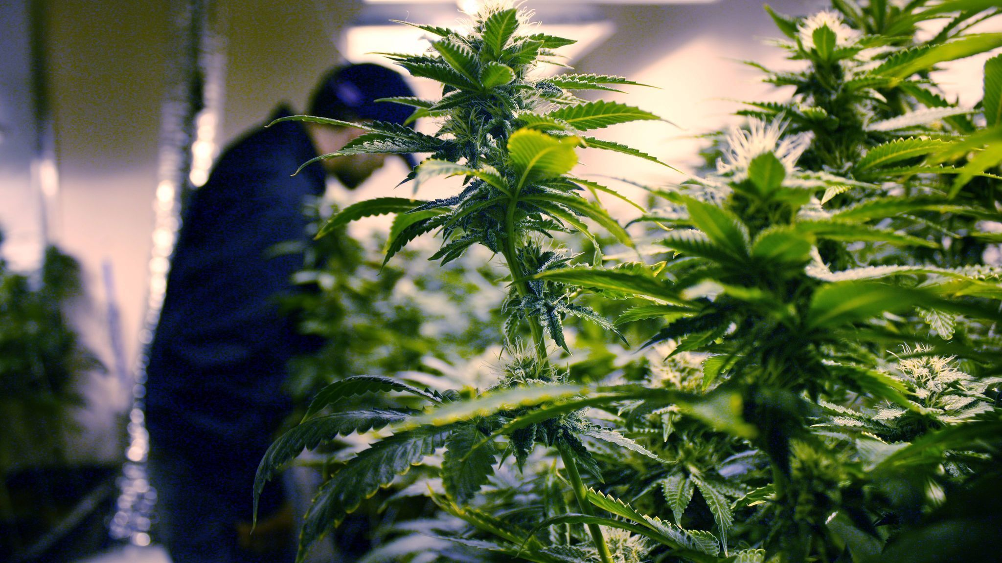 A bill to limit marketing of marijuana on branded merchandise was killed Friday. (Los Angeles Times)