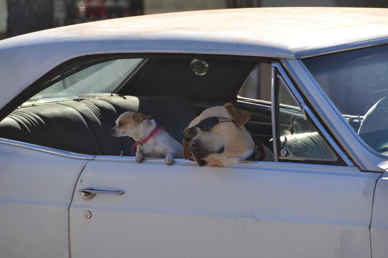 People and pooch watching is part of the experience. (Catharine Hamm / Los Angeles Times)