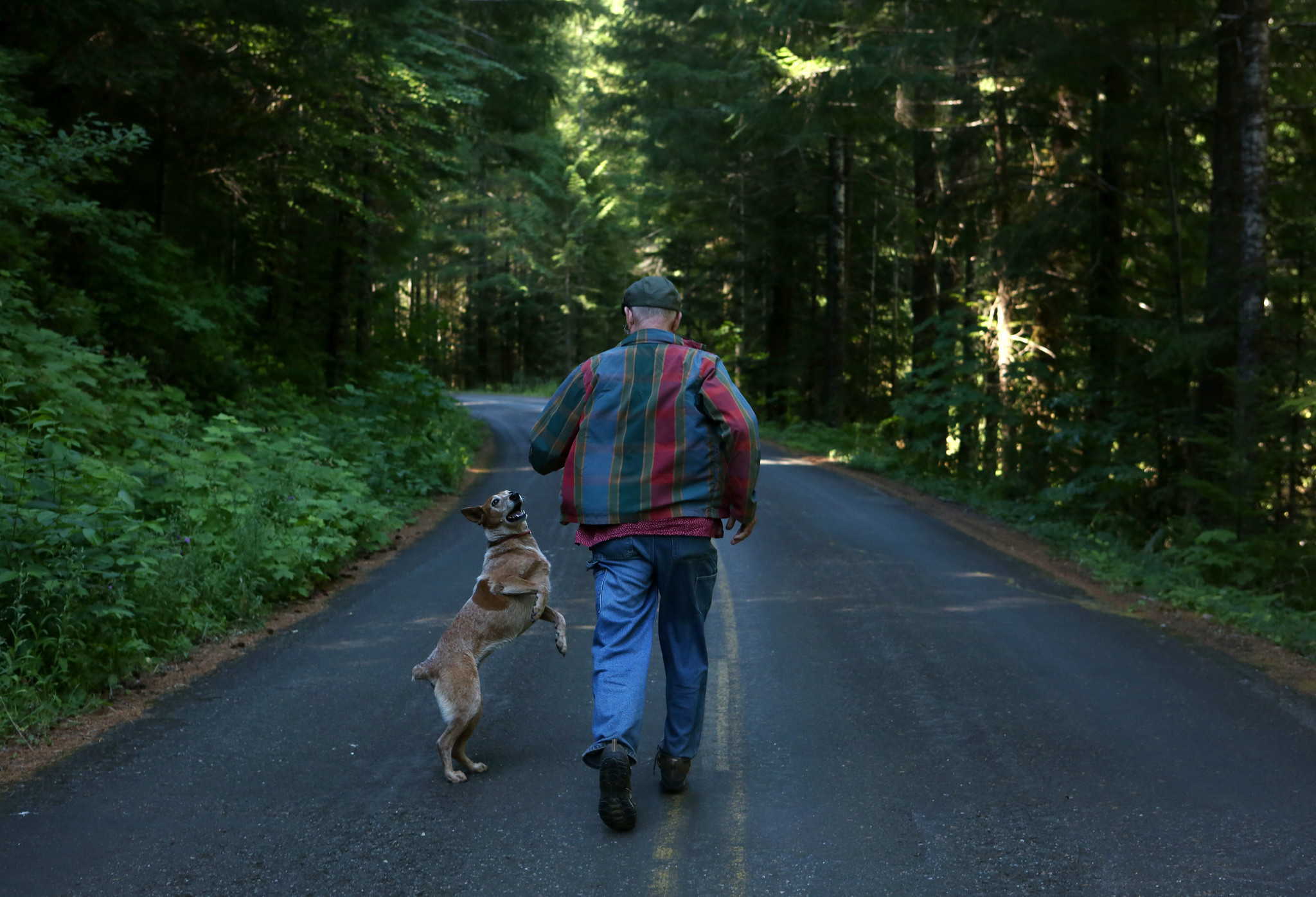 Lee Spencer and his dog, Maggie, run down a road near the creek where they live to keep watch over the steelhead.