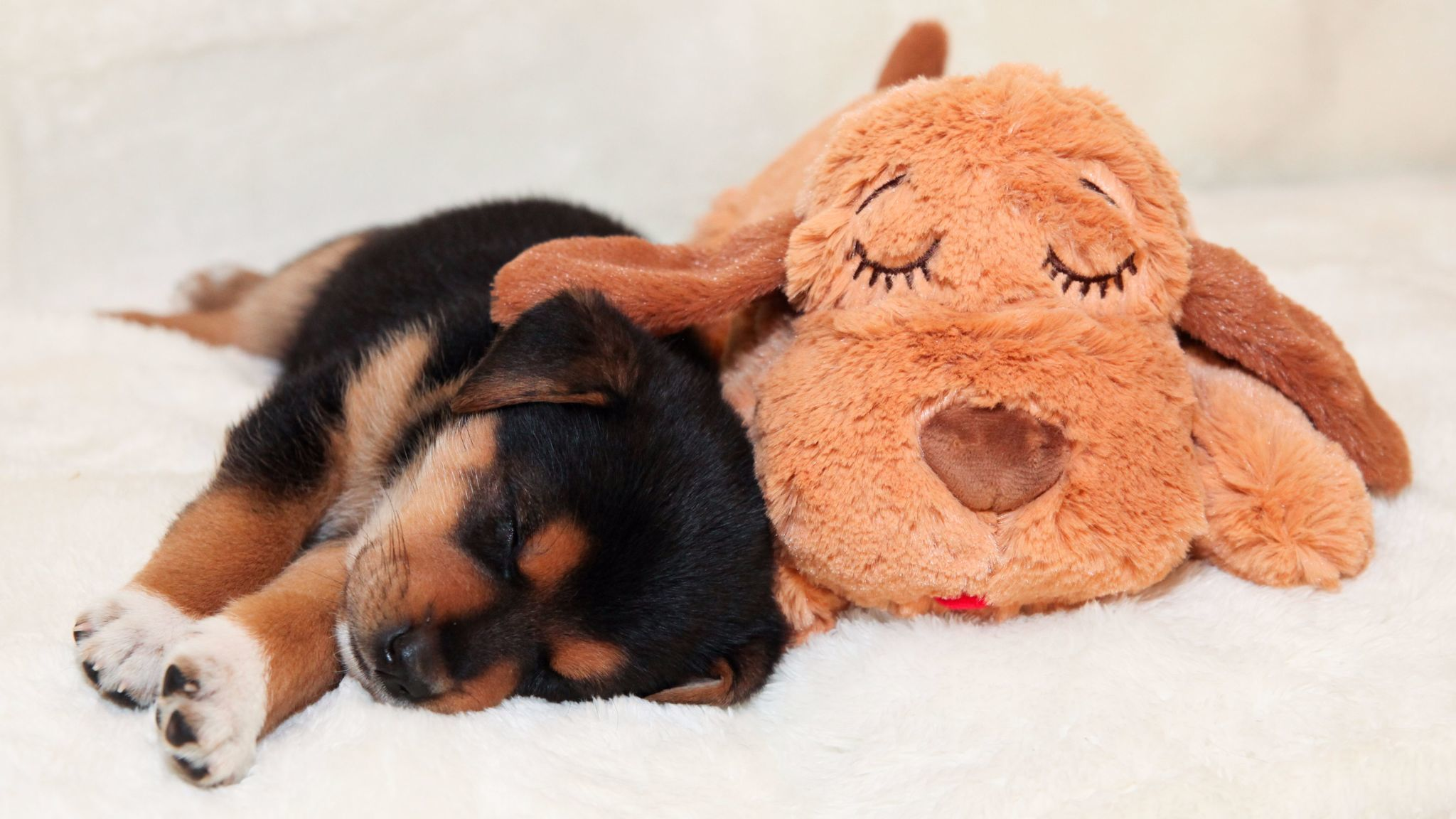 Get ready to pounce Our favorite toys for your favorite pets LA