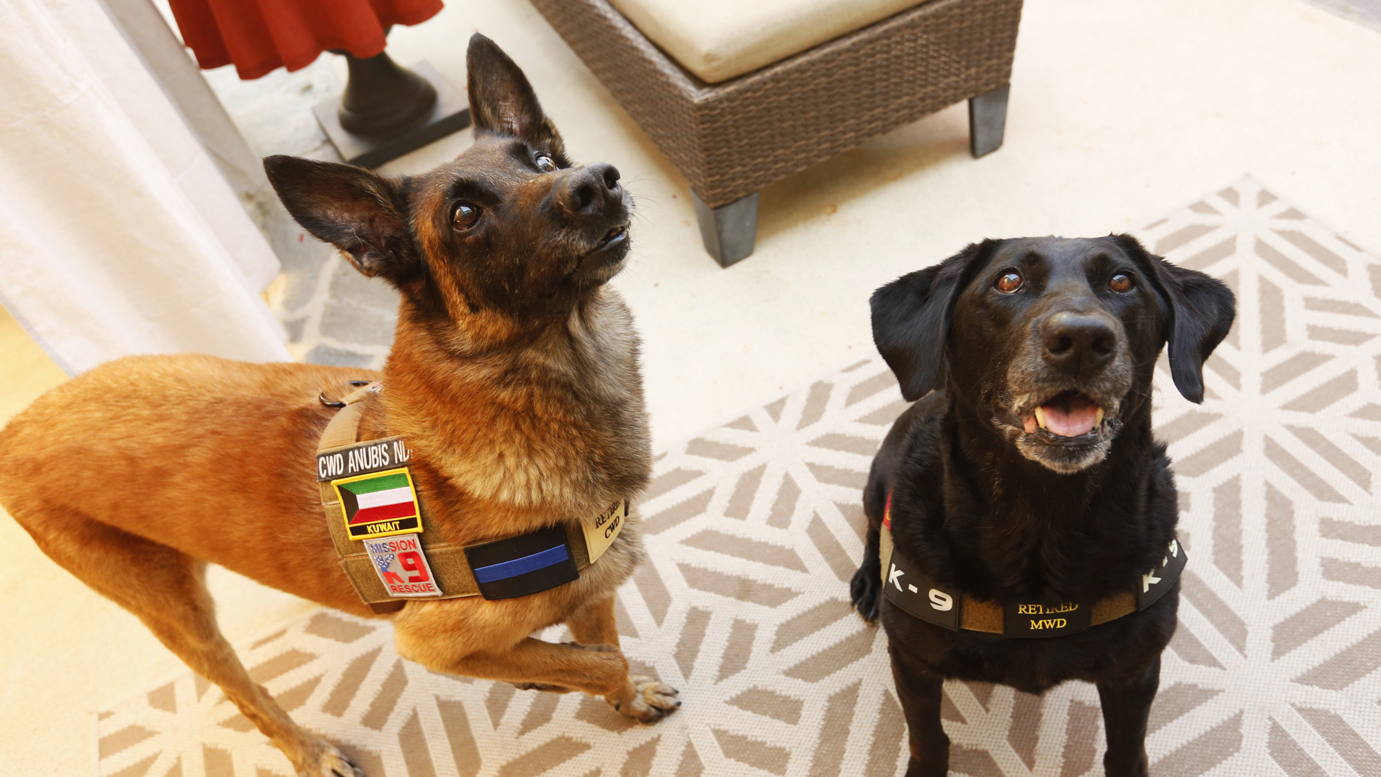 Anubis, left, and Oreo both served their country well. (Genaro Molina / Los Angeles Times)