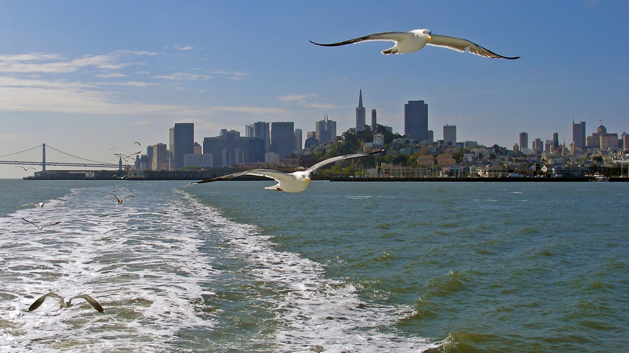 Keep your cool and get cool views of San Francisco on a ferry ride.