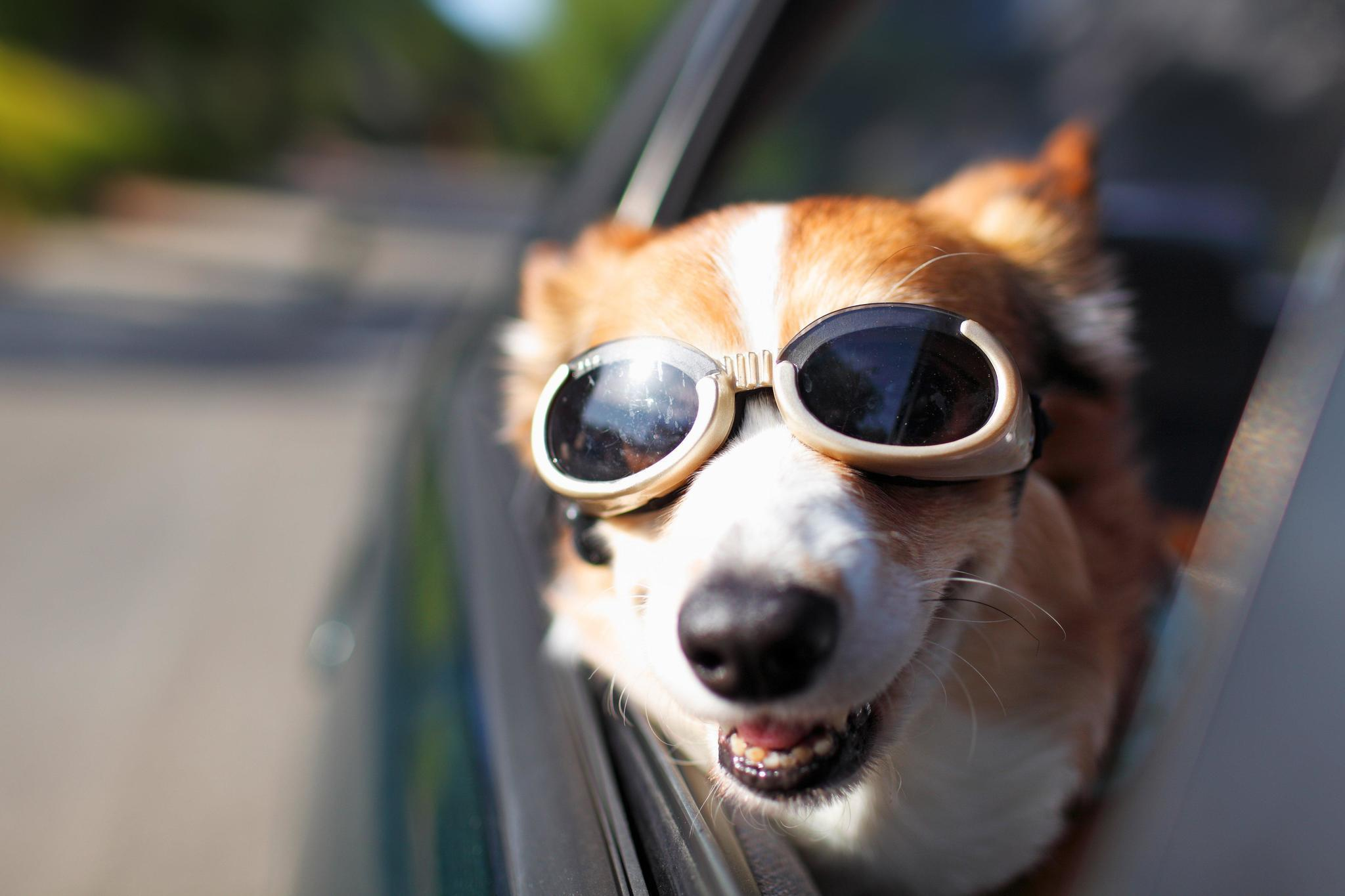 Best New Vehicles For Traveling With Dogs Chicago Tribune