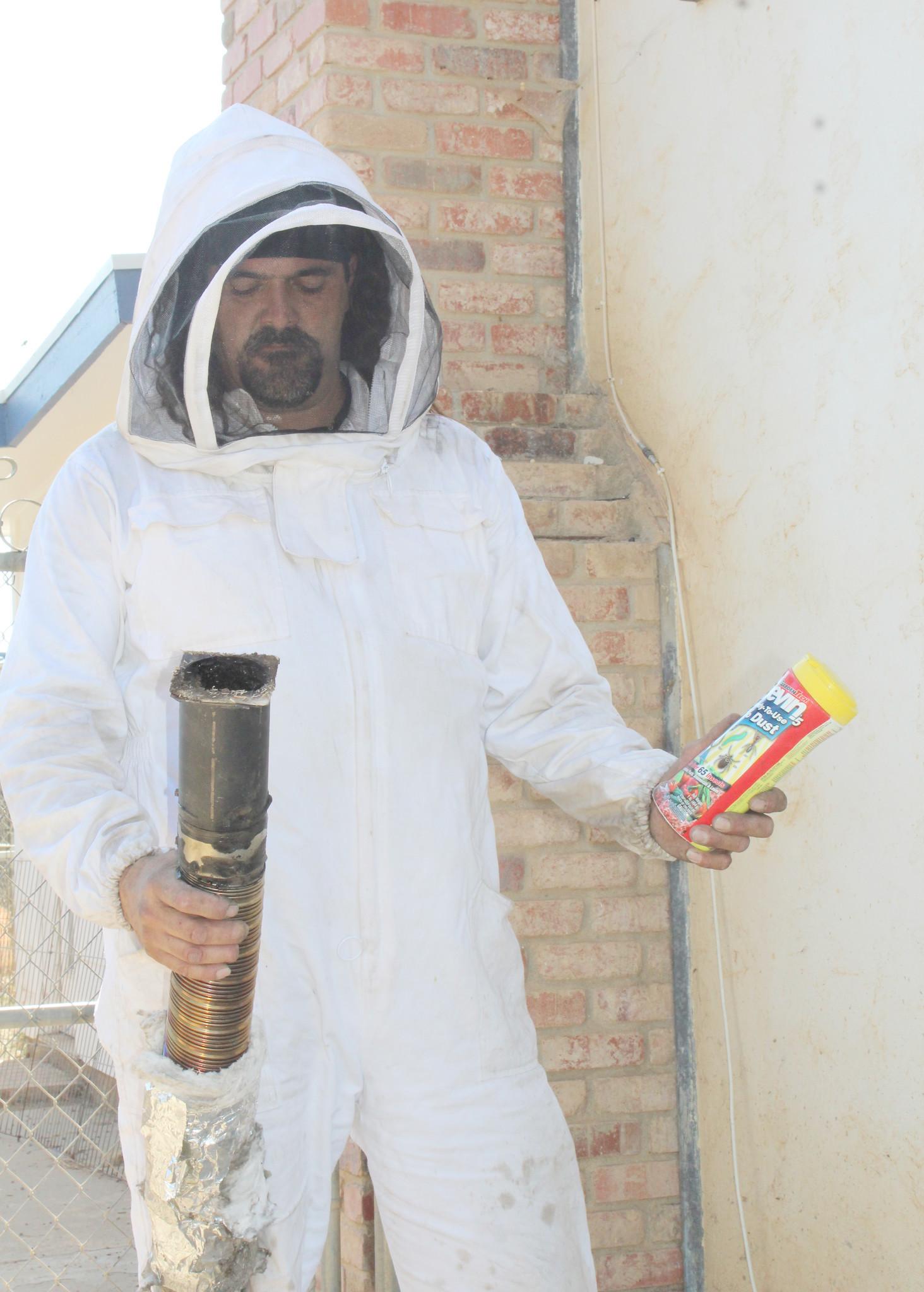 bees u0027set up shop u0027 in chimney ramona sentinel