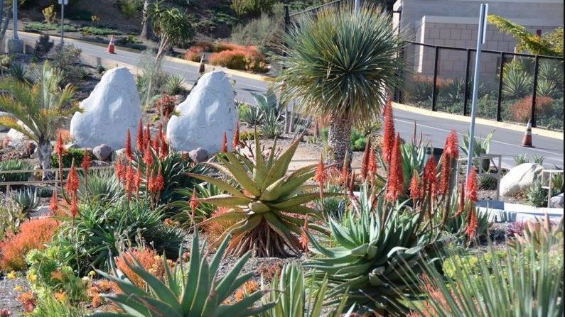 The Brentwood School removed ornamental turf from the campus and replaced it with drought-tolerant plants, and mulch.