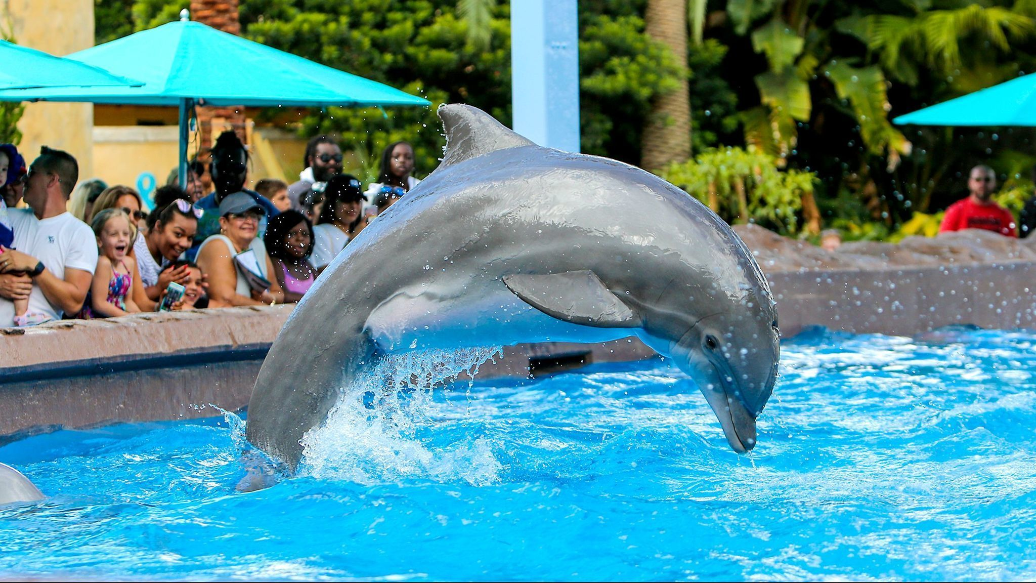 Seaworld Busch Gardens Offer Bogo Tickets To Floridians