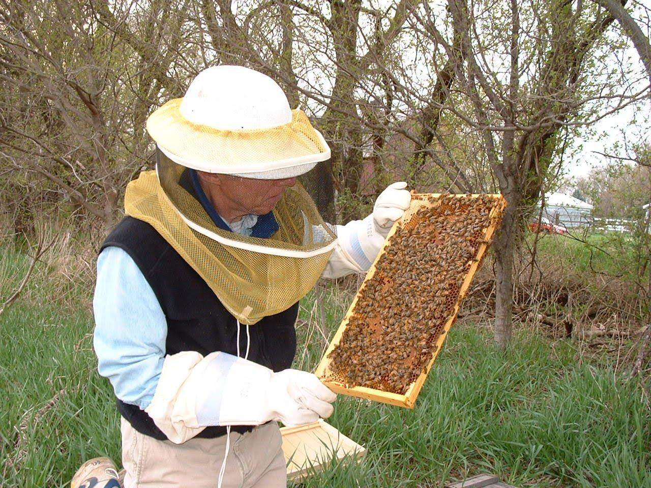 elgin to consider allowing backyard beekeeping elgin courier news