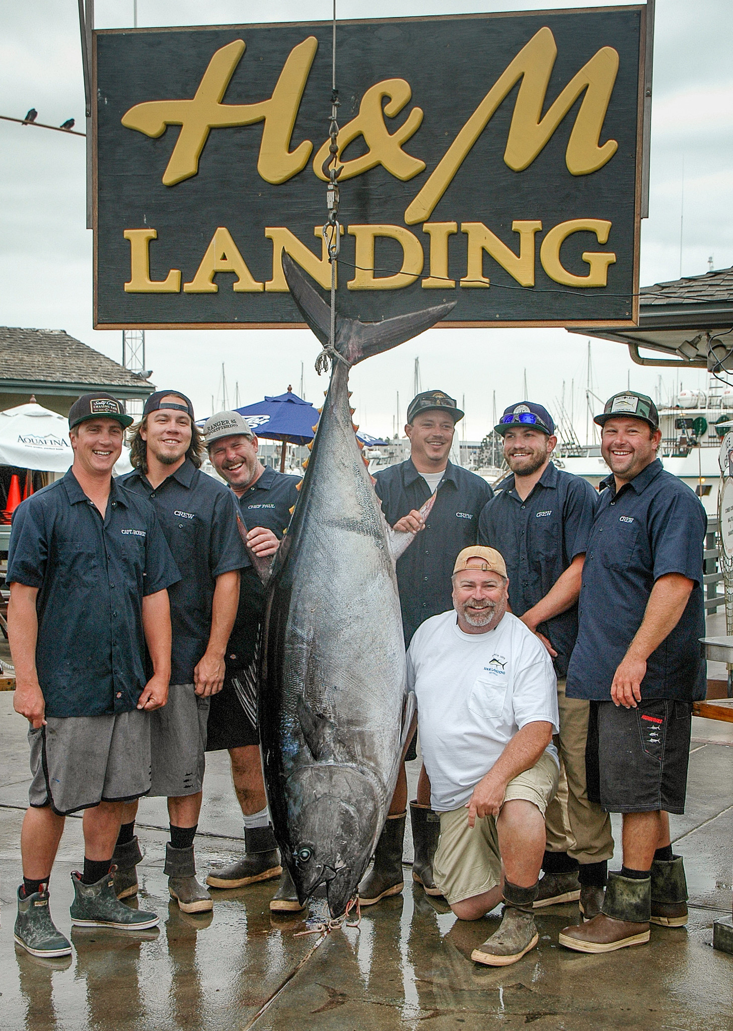 A 345-pound bluefin tuna, caught off San Clemente Island, was weighed at H&M Landing on Wednesday.