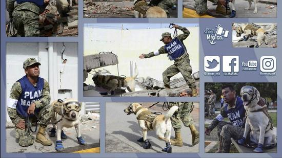 550x309 - Rescue Dog in Mexico City - Photos Unlimited