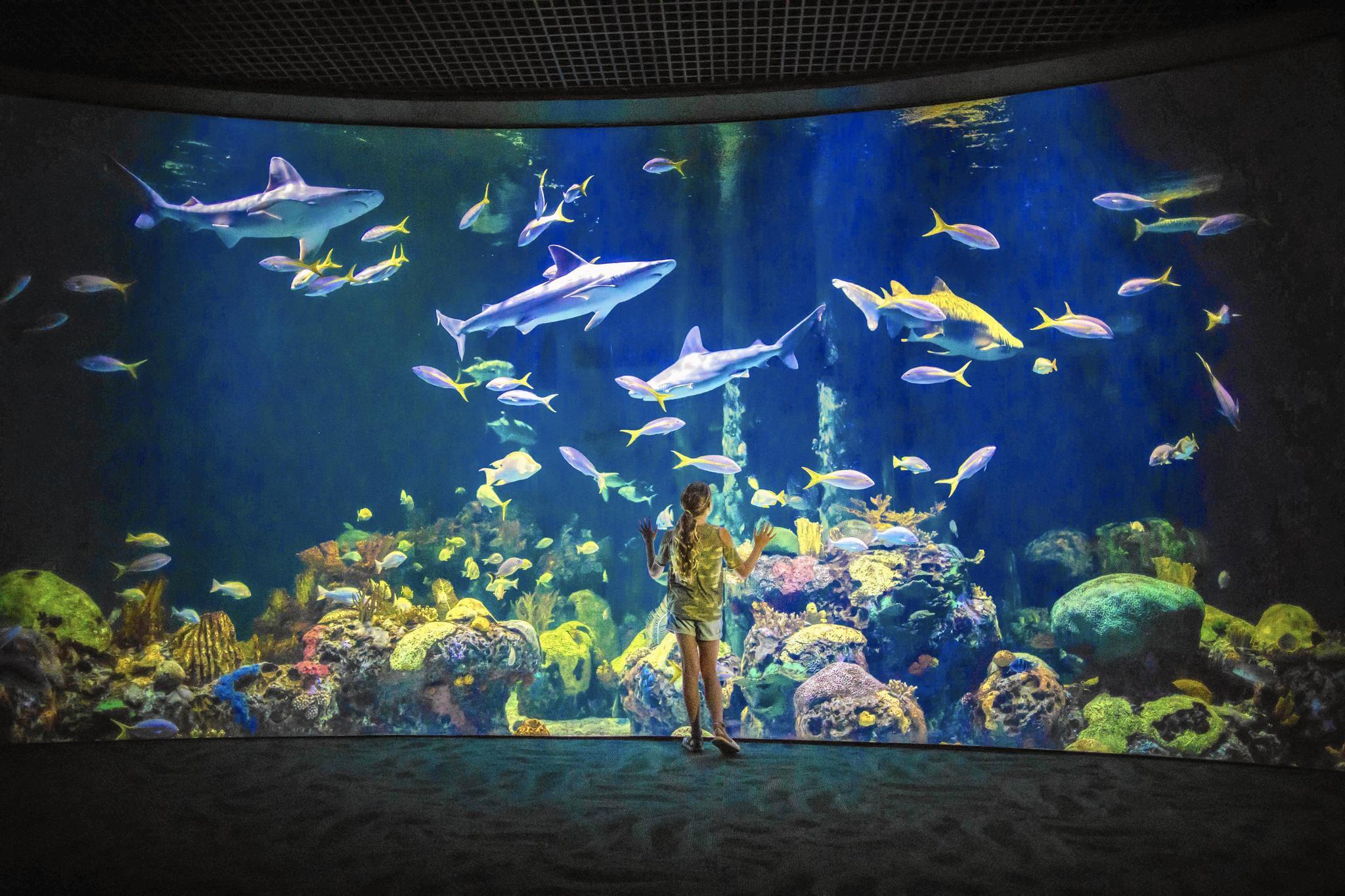 New Wonders of Wildlife aquarium and museum turns conservation knob