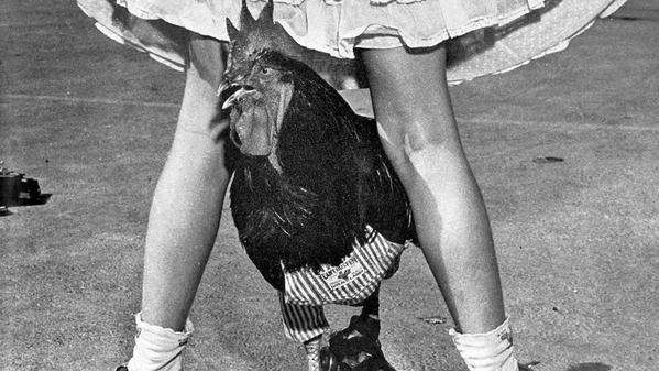 From the Archives: Meet Buster, the rooster who can skate