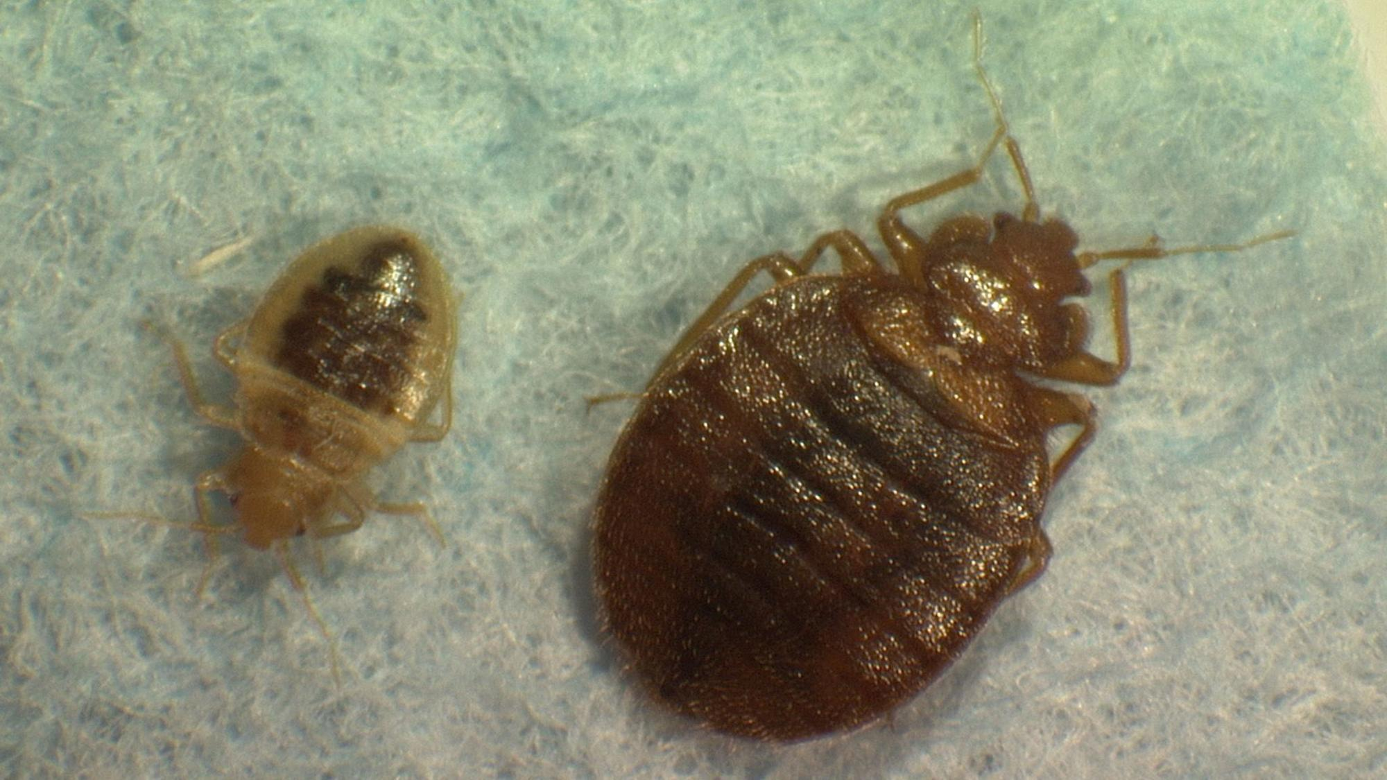 a family wins 546000 over bedbugs at a rancho cucamonga With bed bug litigation