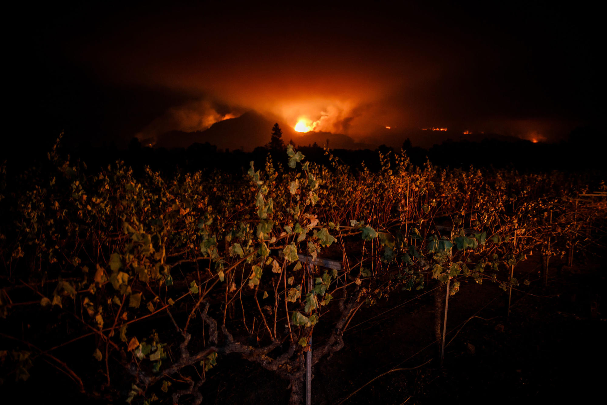 Fire lights up the night sky framed by a vineyard near Kenwood.