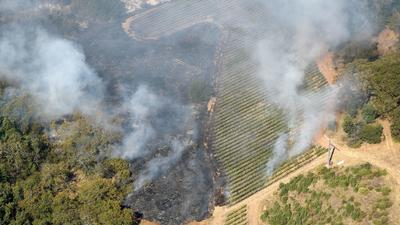 Vineyards may have kept wine country fire from getting worse