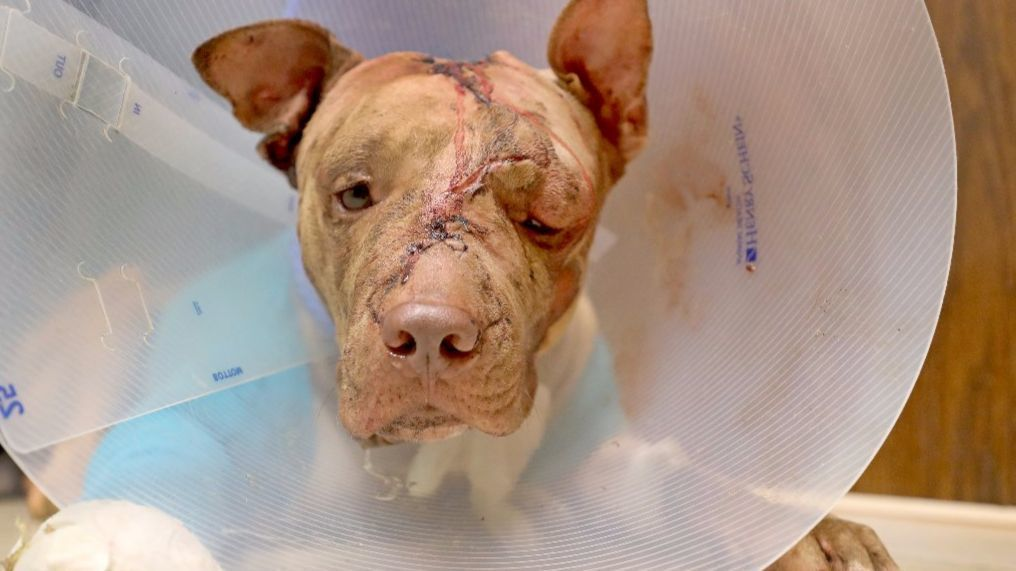 Foster To Adopt Dog Broward County