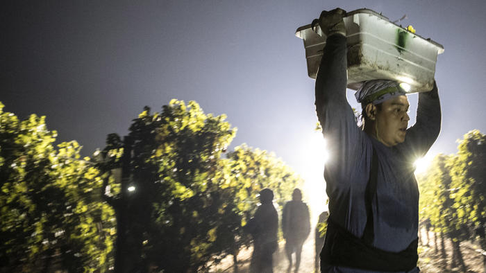 Overnight crews in Napa continue harvesting grapes despite the fires that seemingly surrounded them. None