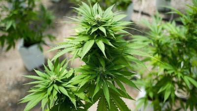 Pikesville dispensary is latest conflict between medical cannabis providers and neighbors