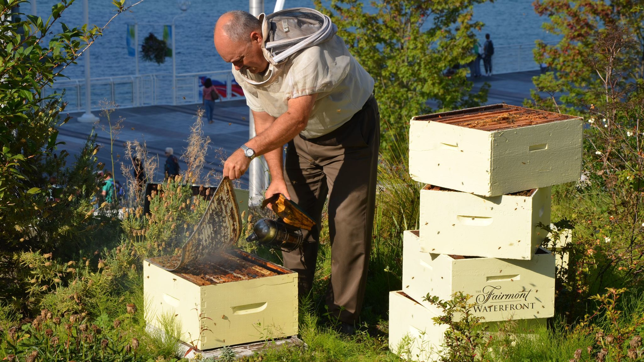 A beekeeper attends to the apiary at the Fairmont Waterfront in Vancouver, British Columbia. Fairmont keeps bees at over 20 properties around the world.