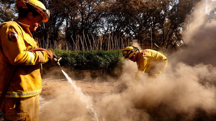 Firefighters with Cal Fire Mendocino unit extinguish a hotspot near a marijuana grow on the Frost Flower Farms in Redwood Valley. — Photograph: Genaro Molina/Los Angeles Times.