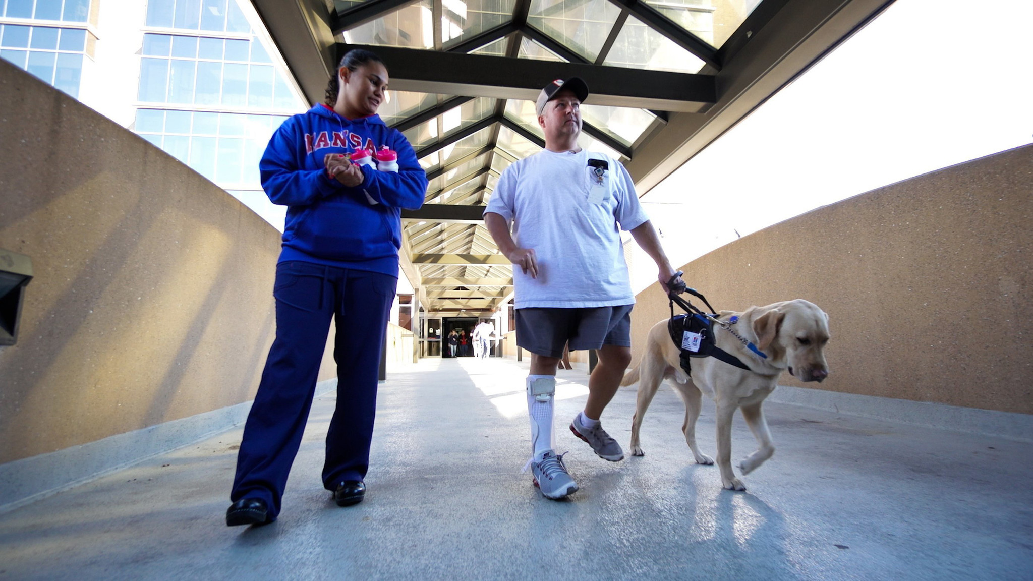 Is that service dog a fake under federal law you cant even ask is that service dog a fake under federal law you cant even ask chicago tribune 1betcityfo Images