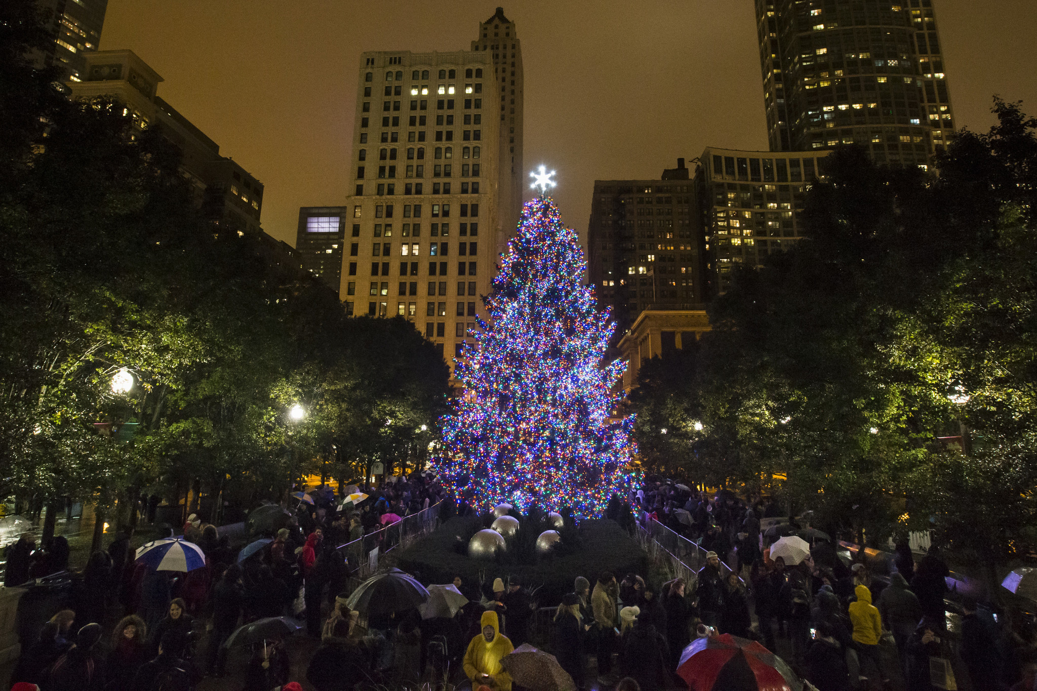 where chicago s official christmas tree comes from chicago tribune