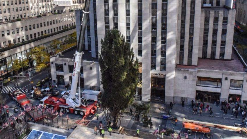 pennsylvania spruce takes center stage as rockefeller center christmas tree the morning call