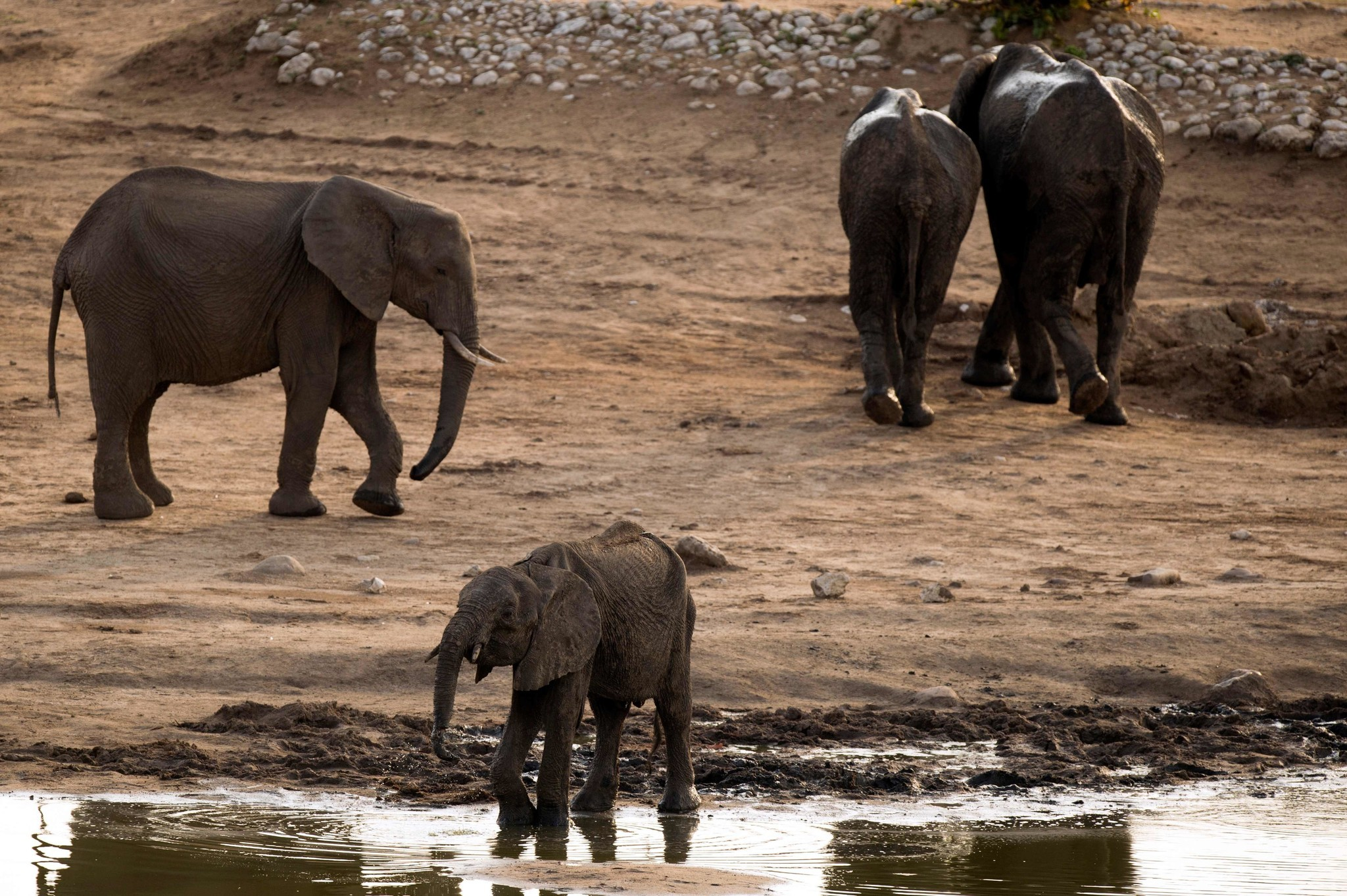 Hunters Are Livid Over Trumps Elephant Trophy Decision