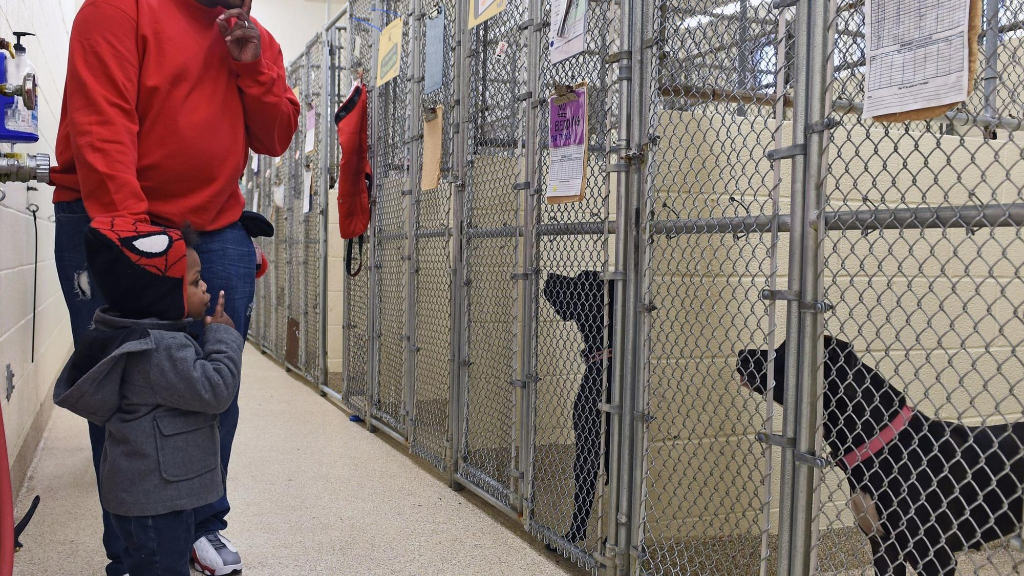 barcs resumes dog adoptions after weeks