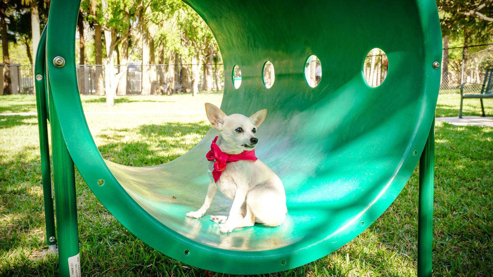 Dog Park In North Miami Beach Fl