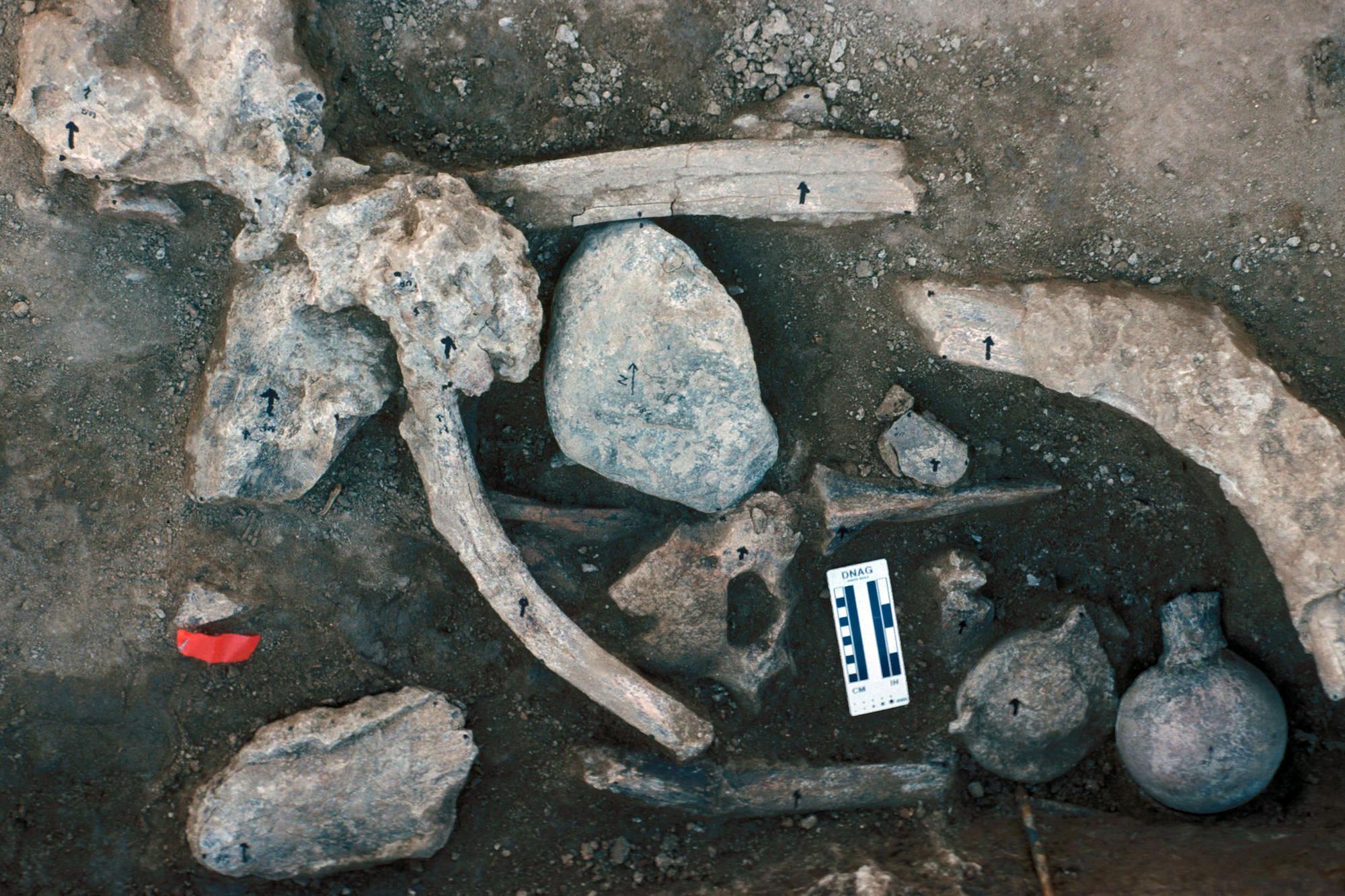 Cerutti mastodon site