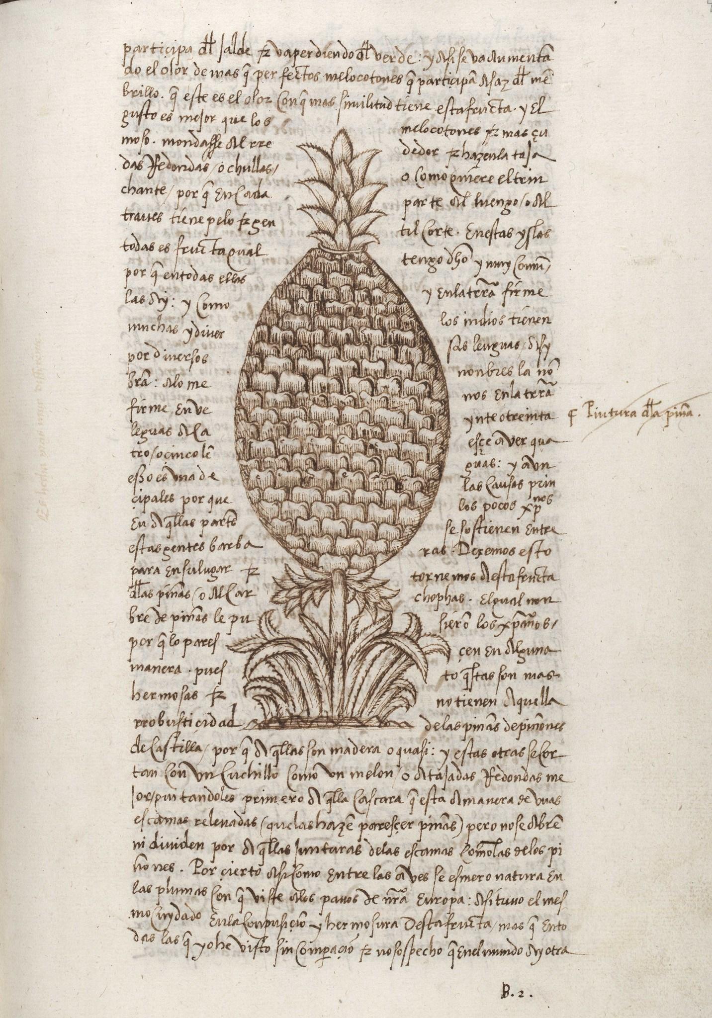 Gonzalo Fernández de Oviedo y Valdés pineapple