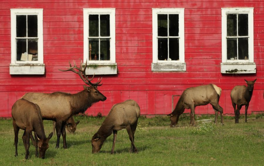 Join the elks club near Trinidad's classic red schoolhouse