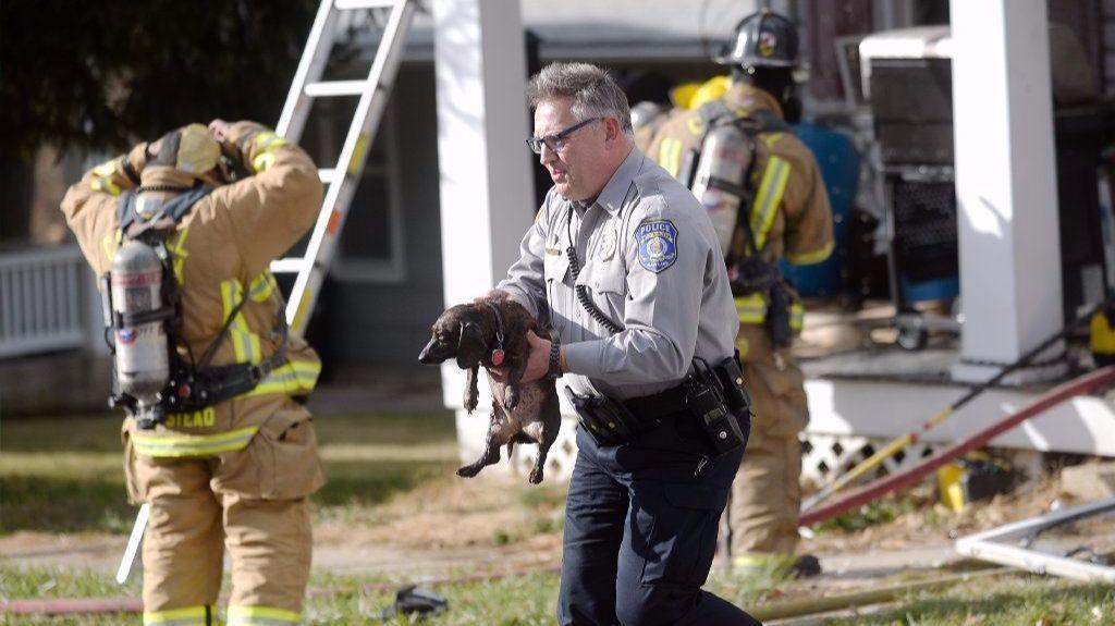 Rescue Dogs Baltimore County
