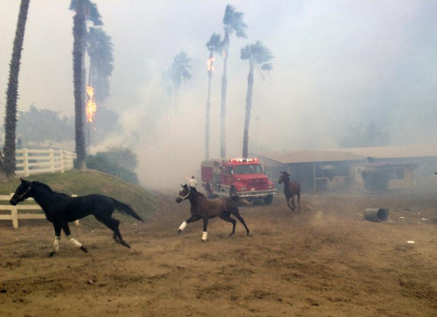 Terrified horses gallop from San Luis Rey Downs as the Lilac Fire sweeps through the horse-training facility in Bonsall. (Paul Sisson/The San Diego Union-Tribune)