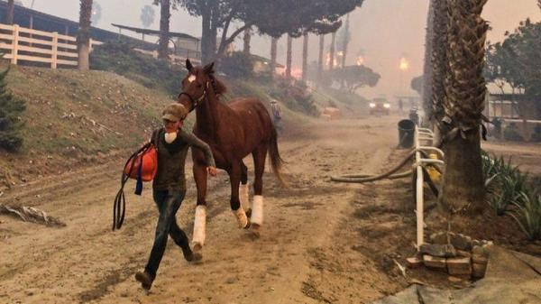 Scores of GoFundMe campaigns said to be seeking help for Lilac fire victims