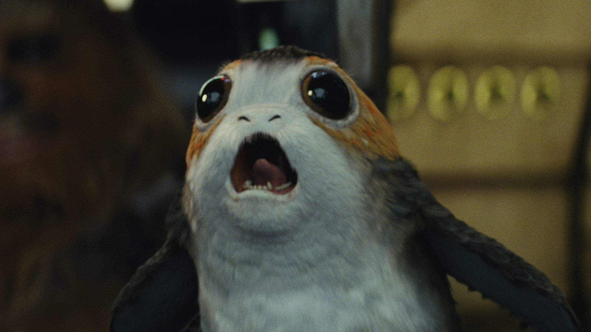 Porg | 'Star Wars: The Last Jedi'