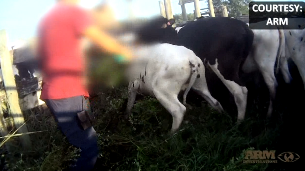 Florida\'s dairy industry gets little scrutiny from the state on ...