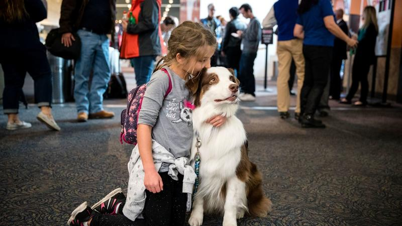 Therapy Dogs, Bomb-Sniffing Canines and Other Pooches Growing in Number at Airports