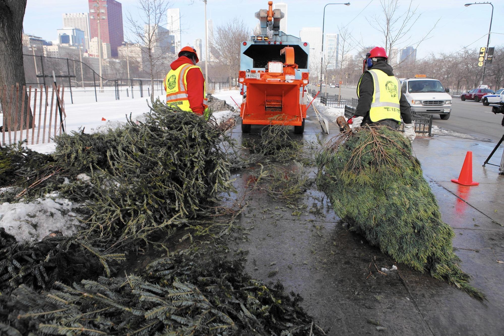 Christmas Trees Chicago