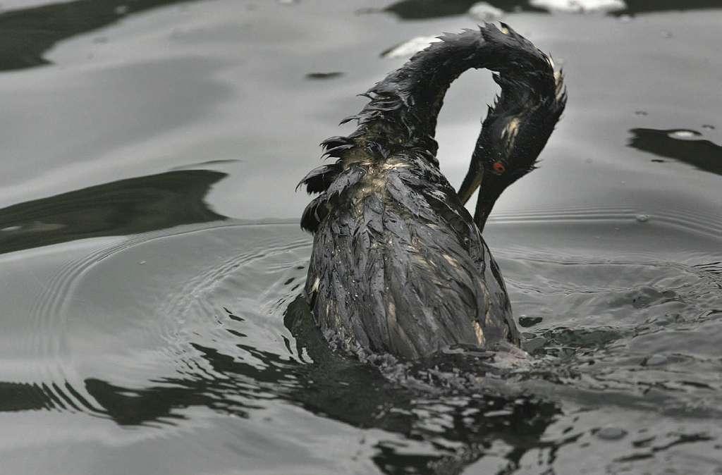 Bay Bridge oil spill of 2007