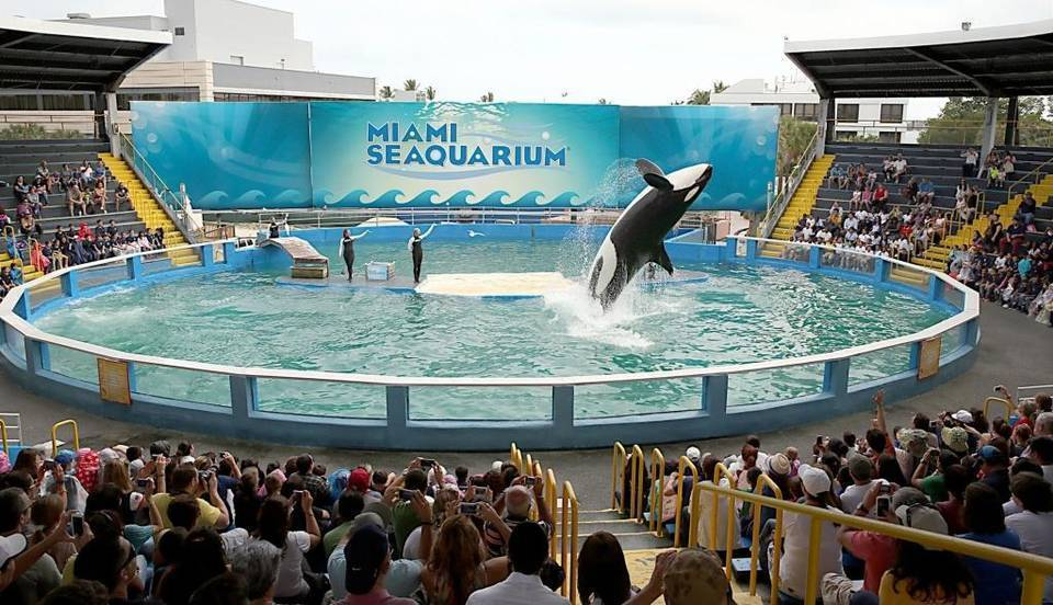 We found several deals that will save you money if you visit the Miami Seaquarium. Goldstar is offering this deal, and this one can be used through Dec. 29, Adult general admission for $ (regularly $) Child's general admission for $ (regularly $) Click here to get up to 50% off the Miami Seaquarium from Goldstar.
