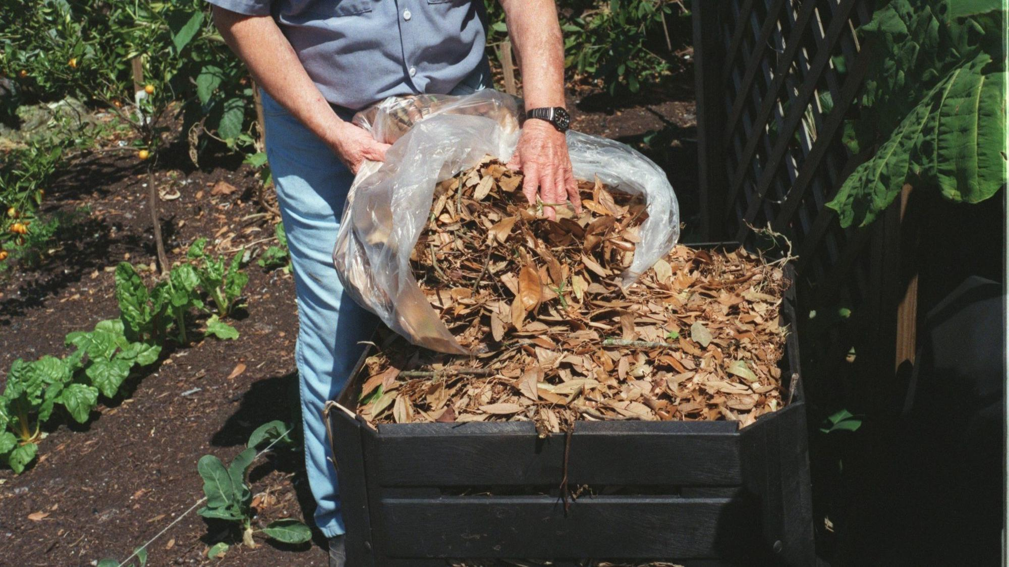 February in the garden - Orlando Sentinel